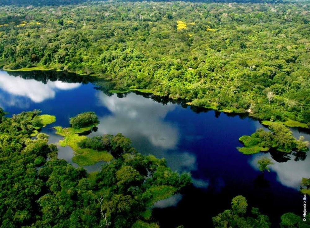 Bolivian Jungle